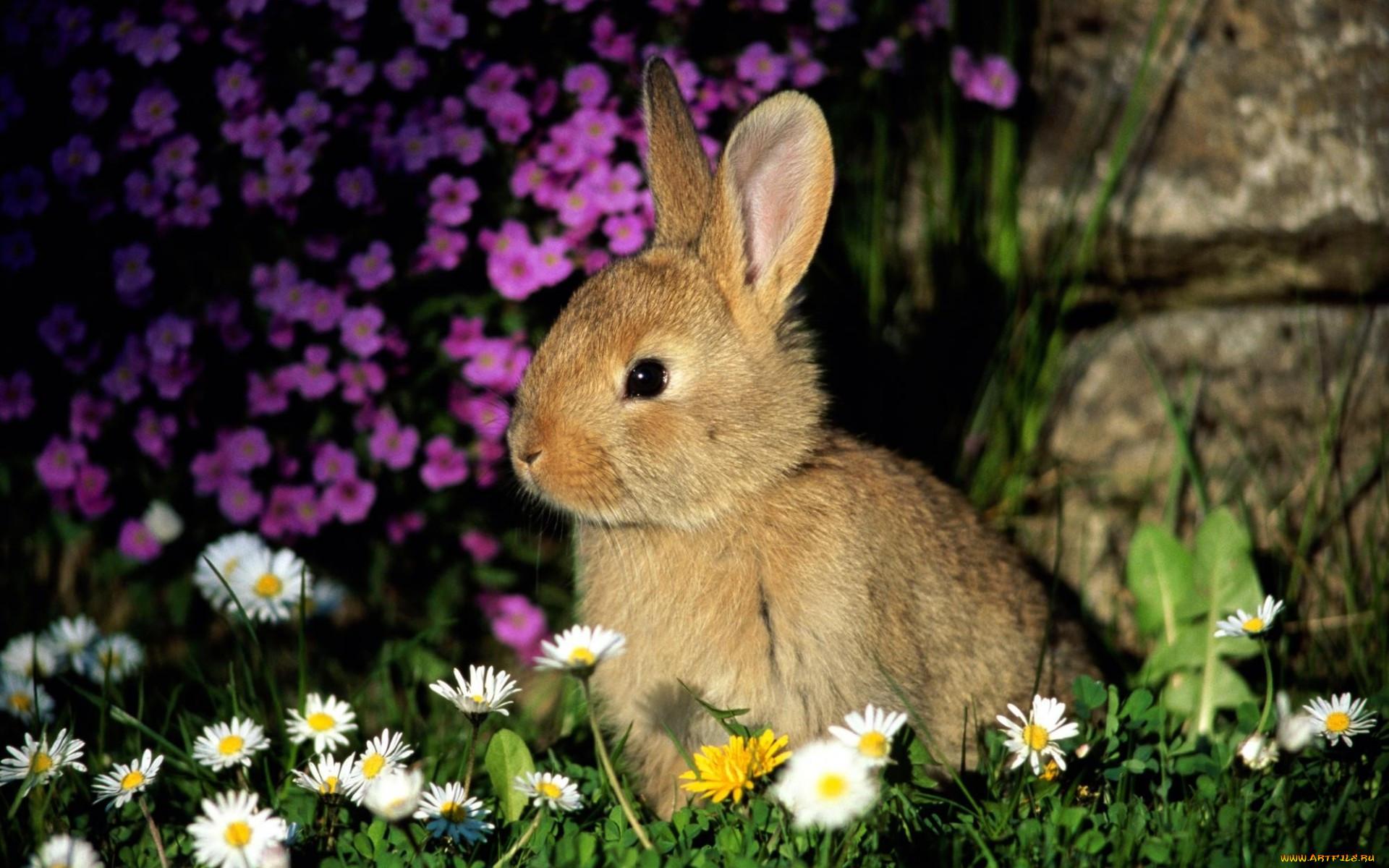 что картинка зайца самая лучшая восхитительно красивых